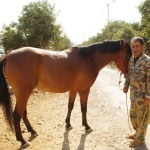 Small man and horse