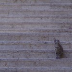 Israel's cat